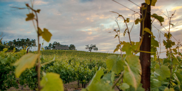 Sonoma Coast Appellation Fully Operating Winery and Vineyard